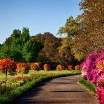 The UK's best RHS gardens